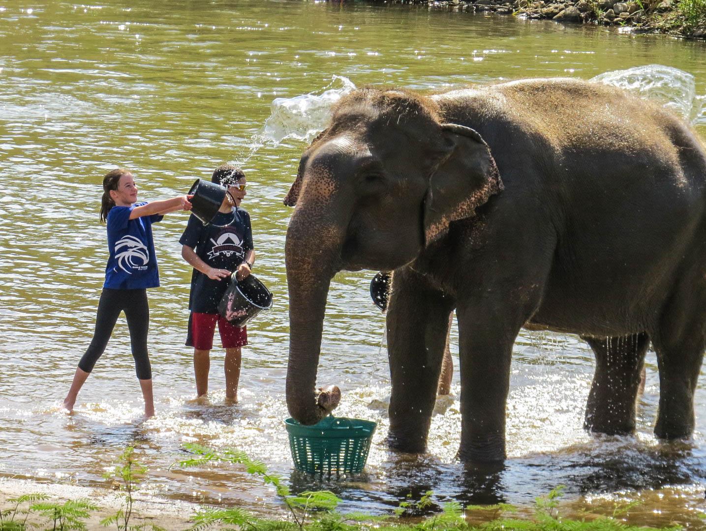 elephant nature park fauteuil roulant