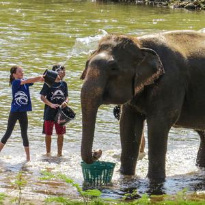 elephant nature park fauteuil toulant