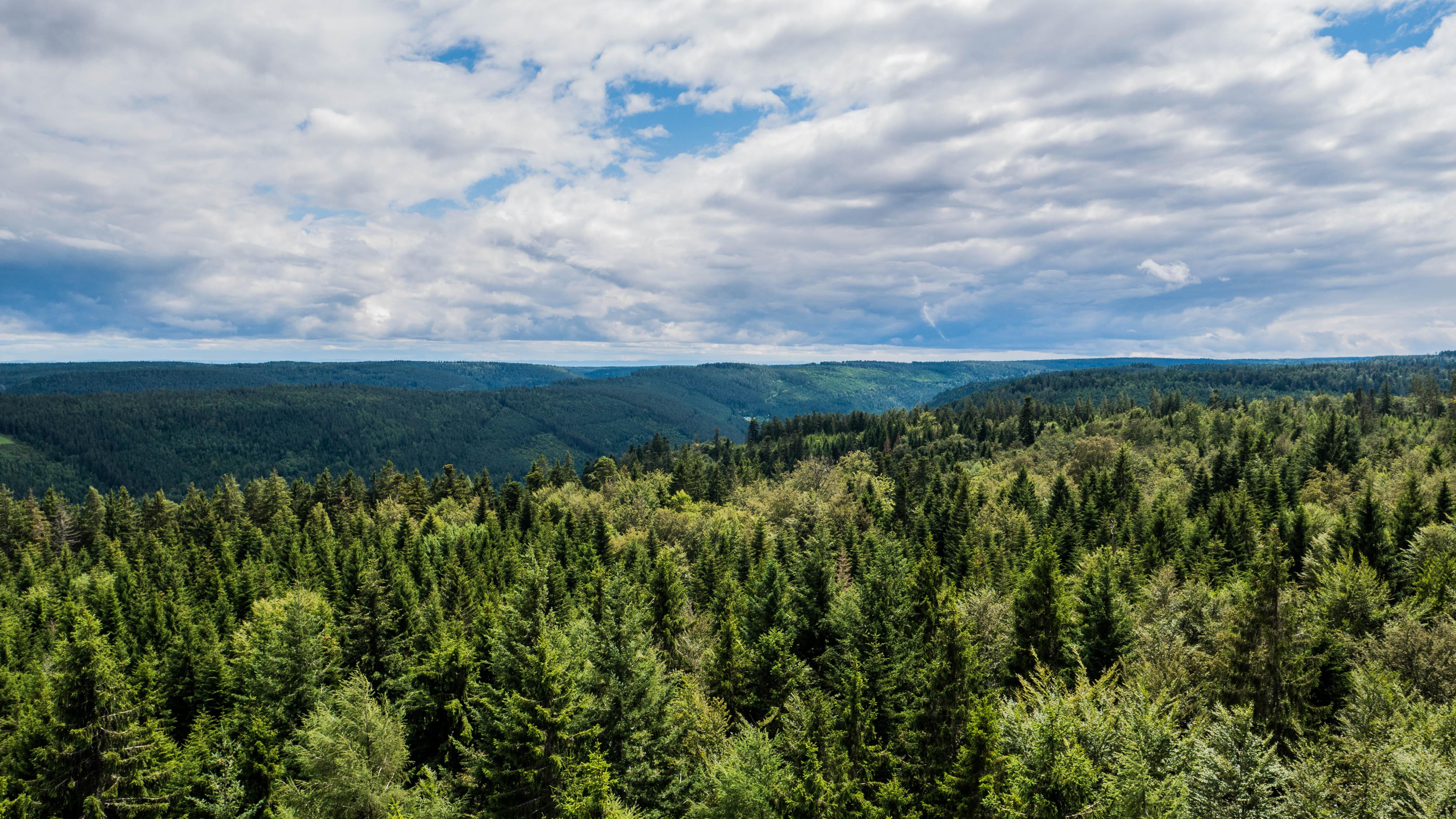 Baumpwipfelpfad, c'est des arbres à perte de vue.